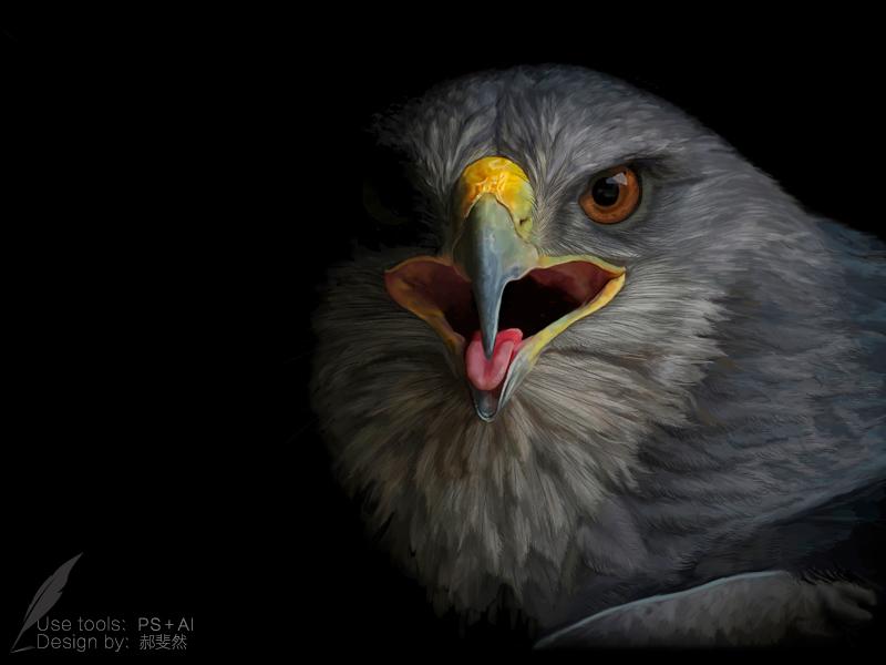 鹰-写实手绘